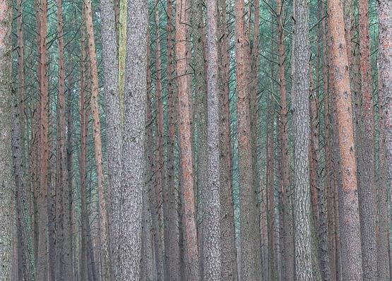Foto - Wald