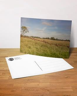 Postkarte Wümmewiese