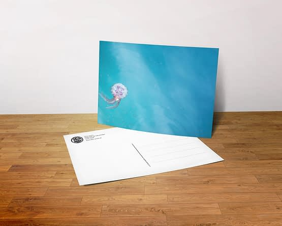 Postkarte - Survival of the Fittest
