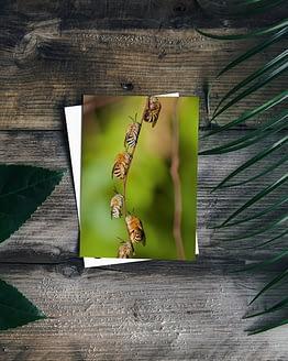 Postkarte - Bienen I